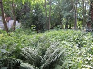 mehr Urwald