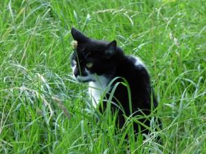 Katze Ronny