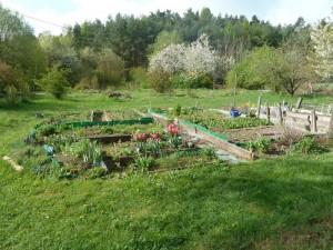 Gemüsegarten im Frühling
