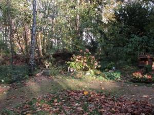 2017 Herbst Lichteinfall 1 mittel